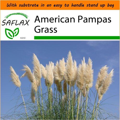 SAFLAX Garden in the Bag - American Pampas Grass - Cortaderia selloana - 200 seeds - With substrate in a fitting stand up bag.