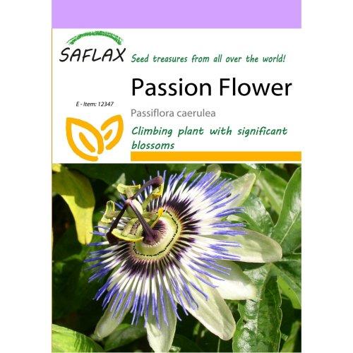Saflax  - Passion Flower - Passiflora Caerulea - 25 Seeds