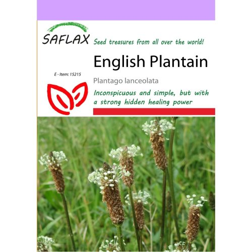Saflax  - English Plantain - Plantago Lanceolata - 100 Seeds