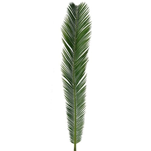 Artificial Green Cycas Palm Leaf - 85cm - Palm / Easter Sunday - Fern Leaves