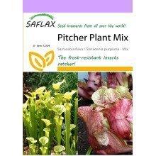 Saflax  - Pitcher Plant Mix - Sarracenia Flava / S. Purpurea - Mix - 10 Seeds