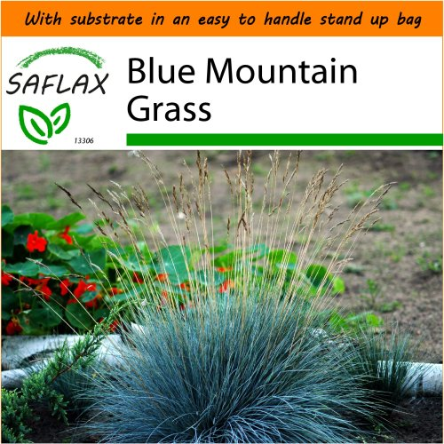 SAFLAX Garden in the Bag - Blue Mountain Grass - Festuca glauca - 50 seeds - With substrate in a fitting stand up bag.