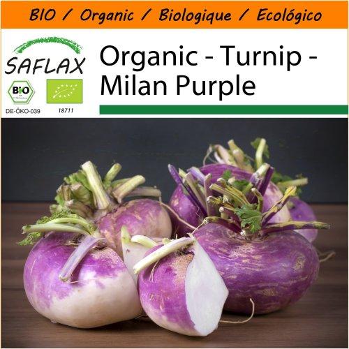 SAFLAX Garden in the Bag - Organic - Turnip - Milan Purple - 600 certified organic seeds  - Brassica