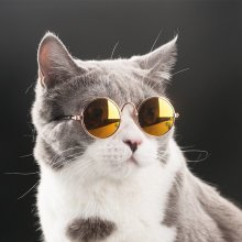 Fashion Glasses Pet Cat Puppy Toy Glasses
