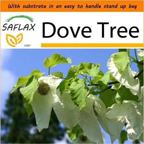 SAFLAX Garden in the Bag - Dove Tree - Davidia - 1 seeds