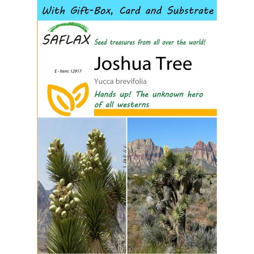 Saflax Gift Set - Joshua Tree - Yucca Brevifolia - 10 Seeds - with Gift Box, Card, Label and Potting Substrate
