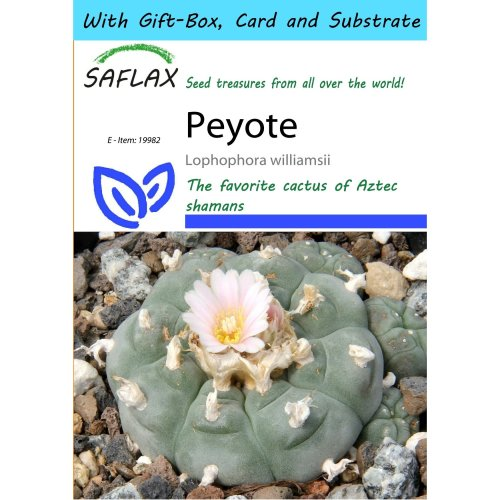 Saflax Gift Set - Peyote - Lophophora Williamsii - 20 Seeds - with Gift Box, Card, Label and Potting Substrate