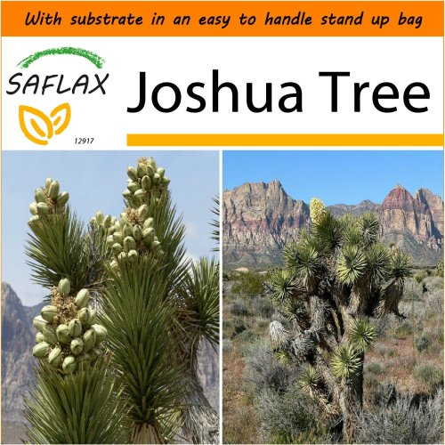 SAFLAX Garden in the Bag - Joshua Tree - Yucca - 10 seeds