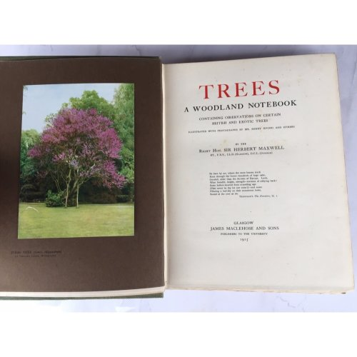 """1915 SCARCE LIMITED EDITION """"TREES - A WOODLAND NOTEBOOK"""" HARDBACK BOOK"""