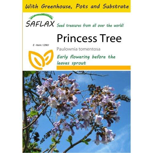 Saflax Potting Set - Princess Tree - Paulownia Tomentosa - 200 Seeds - with Mini Greenhouse, Potting Substrate and 2 Pots