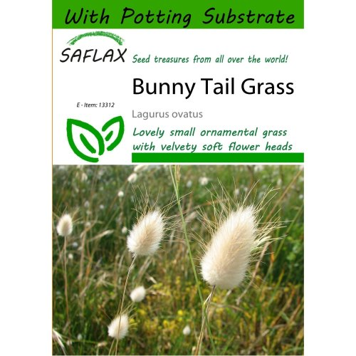 Saflax  - Bunny Tail Grass - Lagurus Ovatus - 100 Seeds - with Potting Substrate for Better Cultivation