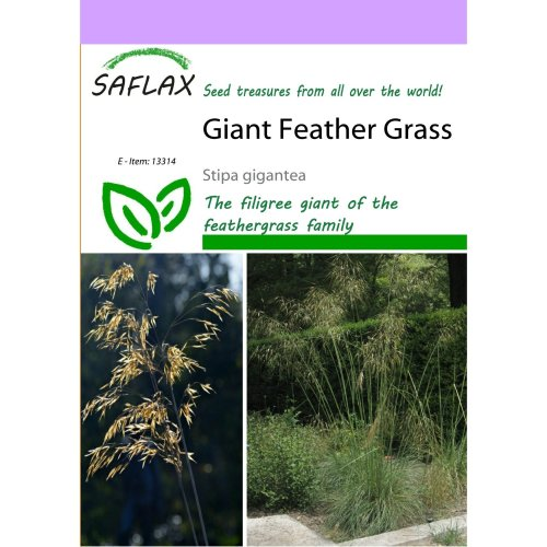 Saflax  - Giant Feather Grass - Stipa Gigantea - 10 Seeds